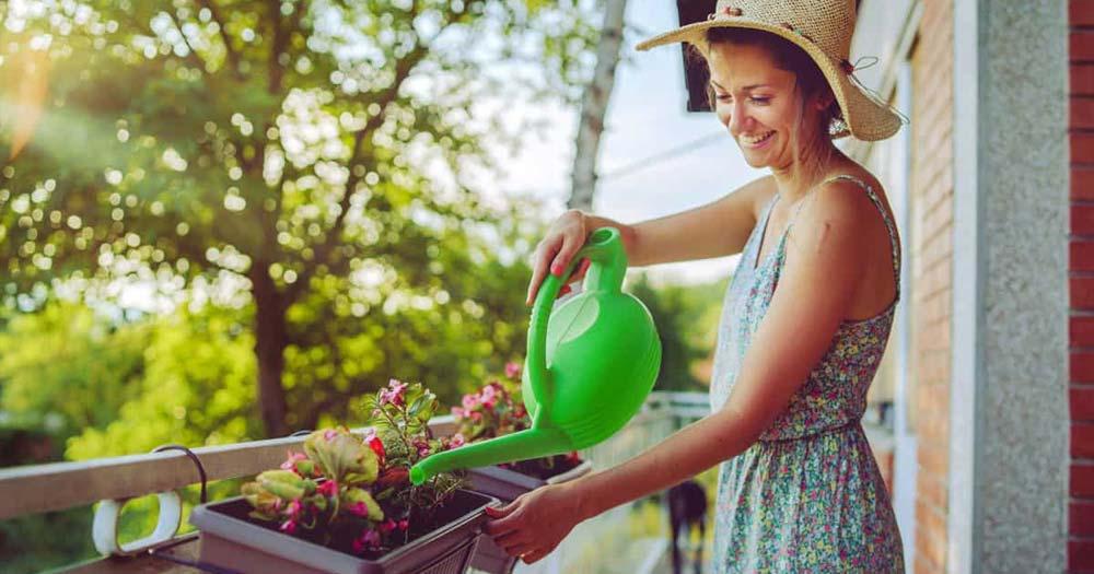 Cách chăm sóc cây cảnh ở ban công chung cư
