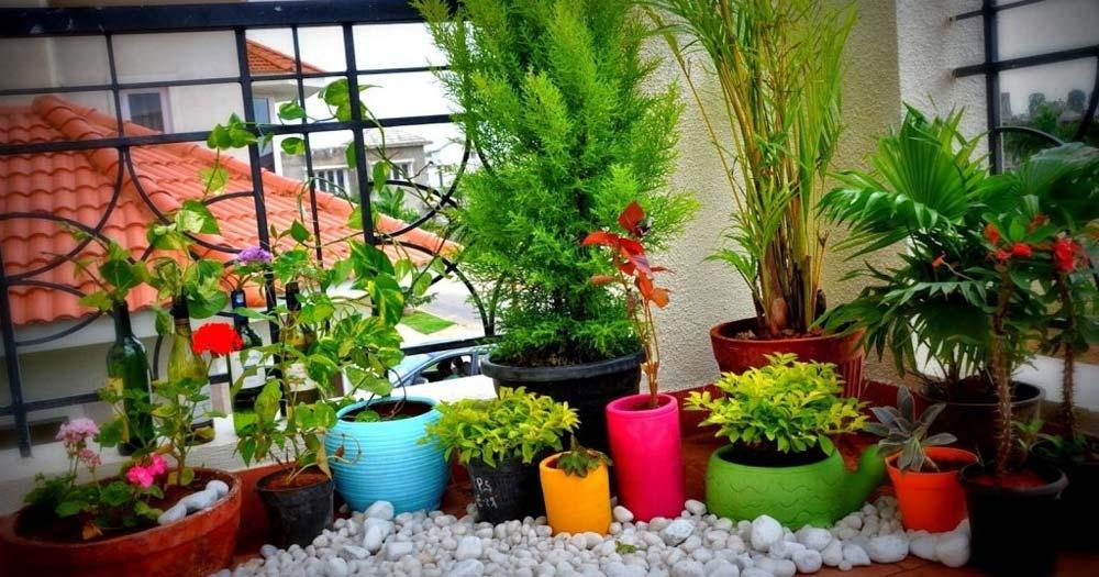 Hướng dẫn trồng cây cảnh ở ban công chung cư