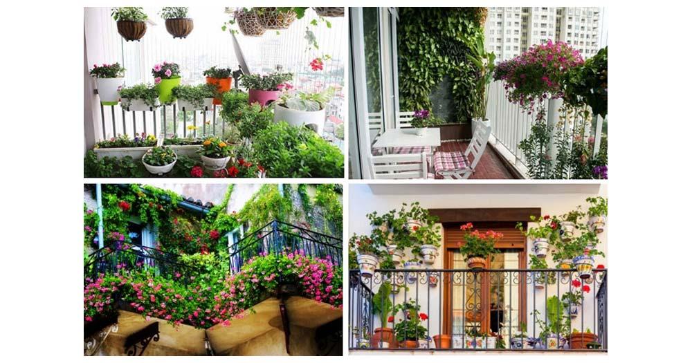 Tại sao nên trồng cây cảnh ở ban công chung cư?